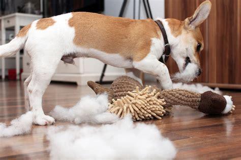 tipps zur hundeerziehung bei hundeerziehung einfach gemachtde
