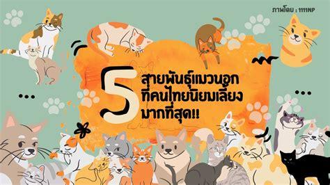 5 แมวสายพันธุ์นอกที่คนไทยนิยมเลี้ยงมากที่สุด!!   TrueID In ...