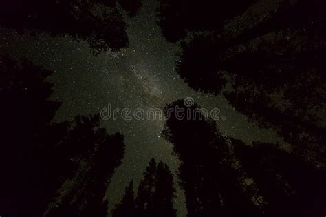 Starry Night Sky With Milky Way Galaxy And Trees