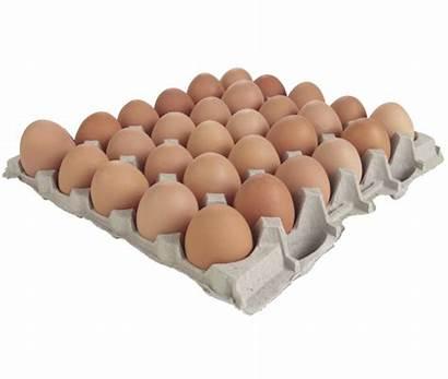 Tray Eggs Egg Wholesale Range Pasture Raised
