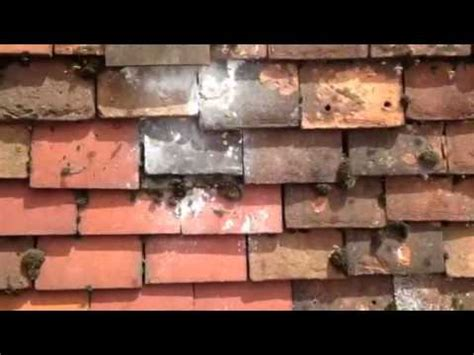 wasps roof tiles