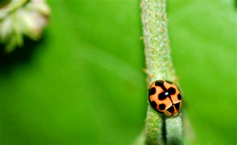what color is a ladybug ladybugs in colors misscurious83