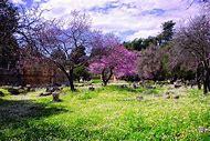 Beautiful Spring Time in Greece