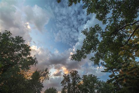 gambar pemandangan pohon alam hutan outdoor horison