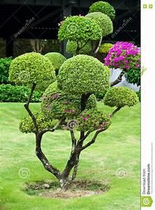 Baum Kleiner Garten : baum im garten stockbild bild 24128751 ~ Orissabook.com Haus und Dekorationen