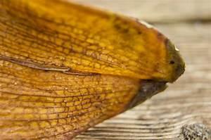 Schmucklilie überwintern Gelbe Blätter : schmucklilie bekommt gelbe bl tter woran liegt 39 s agapanthus ~ Eleganceandgraceweddings.com Haus und Dekorationen