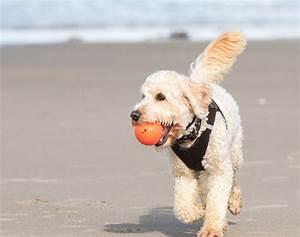Dnemark Urlaub Mit Hund Im Ferienhaus An Ostsee Nordsee
