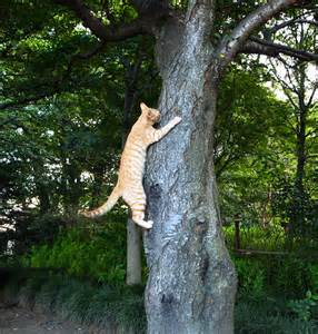 file cat climbing tree uchimaki park jpg