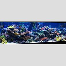 Best 25+ Reef Aquascaping Ideas On Pinterest  Nano Reef