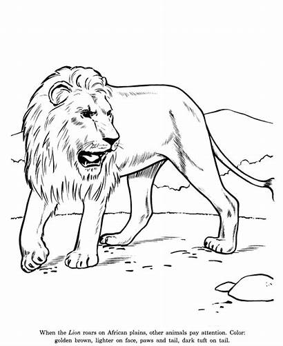Animal Drawing Drawings Pages Animals Coloring Wildlife