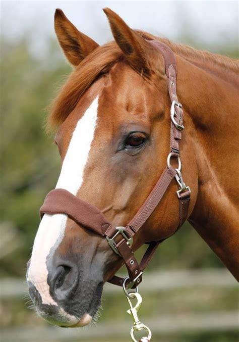 padded fleece horse head collar