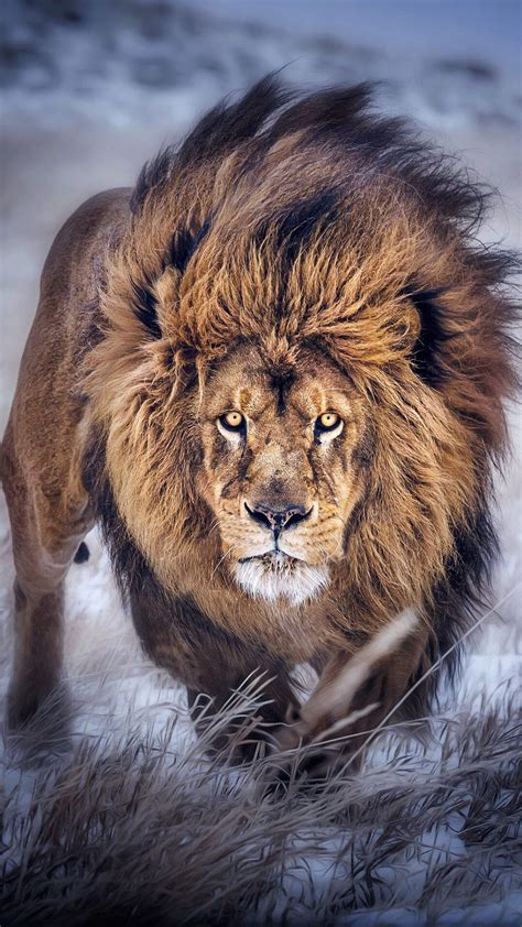 Fierce Animal Wallpapers - iphone wallpaper 79 images
