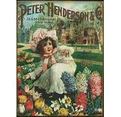 17 Best Images About Antique Seed Catalogues  One Of My