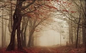 Nature, Landscape, Road, Leaves, Mist, Fall, Trees, Path