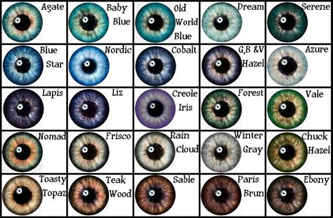 eye color chart pics for gt eye color chart with names on the hunt