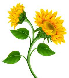 Sunflower Flower Clip Art