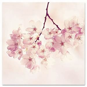 marmont hill quotcherry blossomsquot canvas wall art bed bath With best brand of paint for kitchen cabinets with cherry blossom canvas wall art