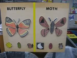News From The Hive  Moths Vs Butterflies