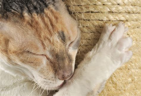 Stop Cat From Scratching Furniture by How To Prevent Indoor Cats From Scratching Furniture 187 Animals