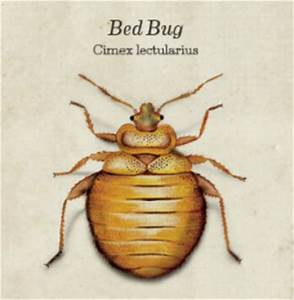 portland or local pest control western exterminator With bed bugs portland oregon