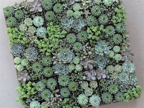 easy care mini succulent garden ideas world  succulents