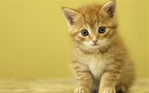 The Ginger Kitten And Queen Of The Doorstep