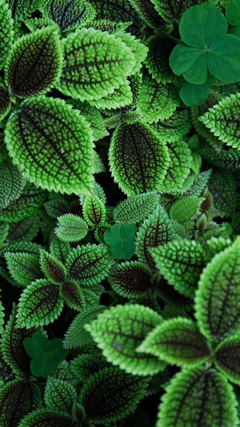wallpaper green leaves plant garden hd  nature