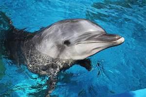 Schöne Delfin Bilder : bild zu delfin dolphins tiere s e tiere und meerestiere ~ Frokenaadalensverden.com Haus und Dekorationen