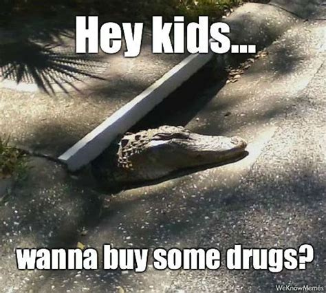Alligator Memes - shady alligator meme collection