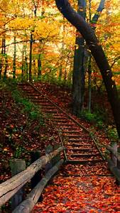 Autumn Path Wallpaper - Free iPhone Wallpapers