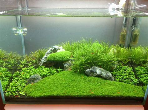 Aquascape Shrimp Tank by Post Your Shrimp Tanks The Planted Tank Forum Fish