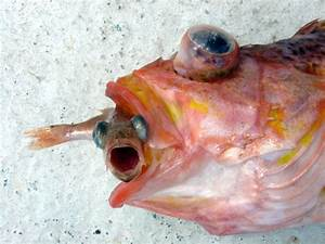 4 Marine Fish Compatibility Blunders to Avoid