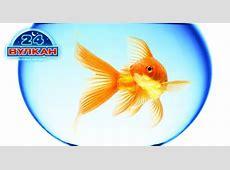 Поймайте удачу в лотерее «Золотая рыбка» от казино 24 Вулкан