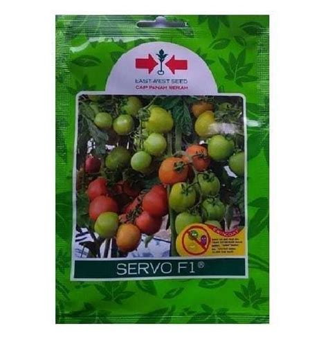 jual benih tomat servo   biji panah merah bibit