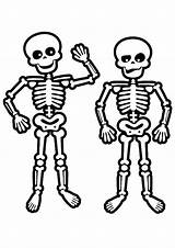 Skeleton Coloring Pages Skeletons Human Face Drawing Skulls Skeletal System Easy Body Colouring Printable Skull Anatomy Toddler Preschool Sheets Baby sketch template