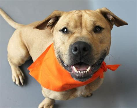 pet adoption resources news pittsburgh pittsburgh