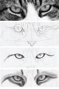 how to draw a realistic cat how to draw realistic cat drawing apps directories