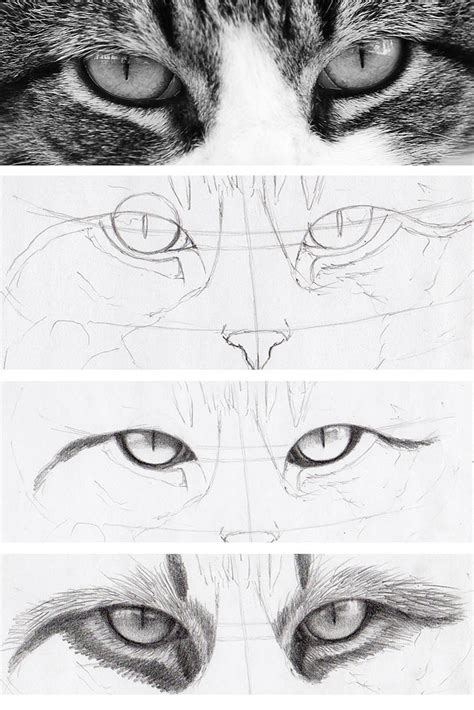 draw cat eyes   real