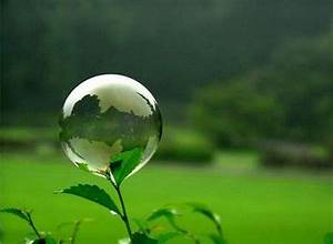 amazing plants and flowers   Water-Bubble-Plant-1 most ...