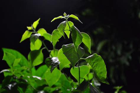 leafy shrubs free images tree nature branch sunlight leaf flower foliage green jungle botany