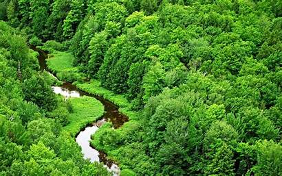 Jungle Rainforest Nature Forest Trees Stream Wallpapers