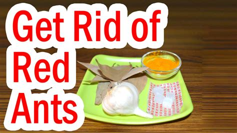 Best Way To Get Rid Of Ants In Bathroom How To Get Rid Of