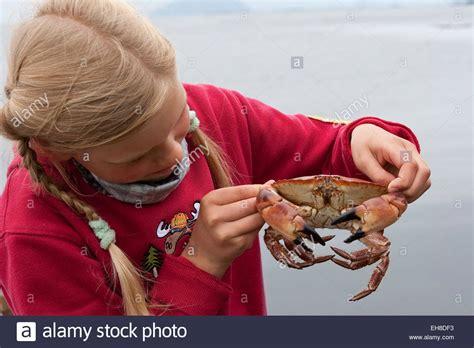 Crabe Dormeur by European Edible Crab Cancer Pagurus Stock Photos