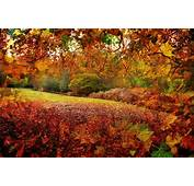 New Forest Hampshire England Autumn Leaves Tree