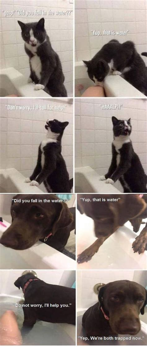 The Best Funny Pictures Of Todays Internet