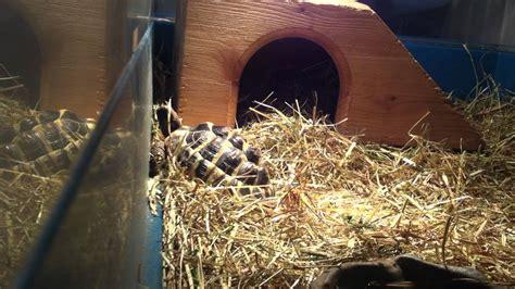 hibernation tortues terrestres comment pr 233 parer le terrarium