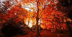 autumn, beautiful, colors, fall, forest - animated gif ...