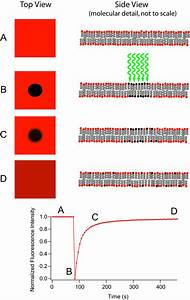 Fluorescence Recovery After Photobleaching