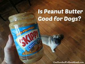 Is Peanut Butter Good for Dogs? - One Hundred Dollars a Month