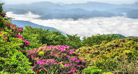 Craggy Gardens by Craggy Gardens Trail For Rhododendron